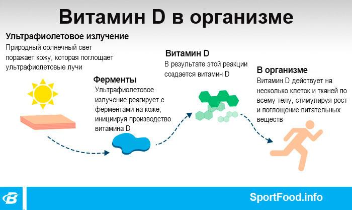 Витмин Д в организме
