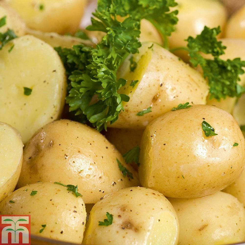 kartofel-i-krahmal